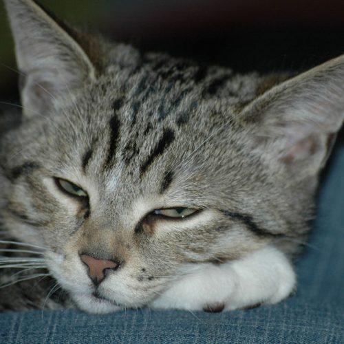 Bio Ferienhof Hagspiel Katze