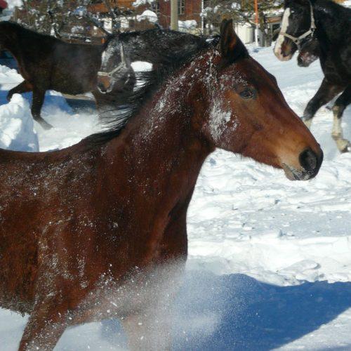 Bio Ferienhof Hagspiel Pferd im Schnee
